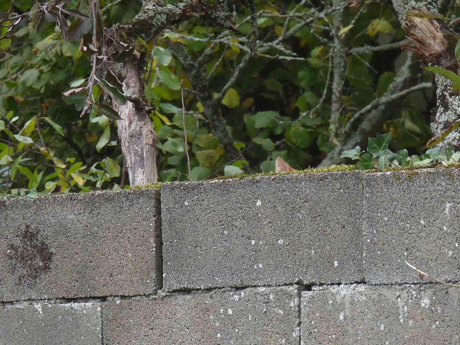 journal d un retour au pays natal 177 un chat se cache
