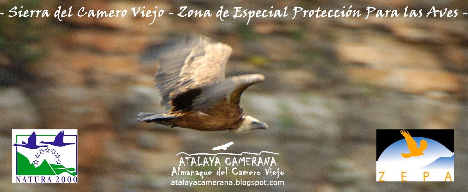 Sierra del Camero Viejo: Zona de Especial Protección Para las Aves (ZEPA).