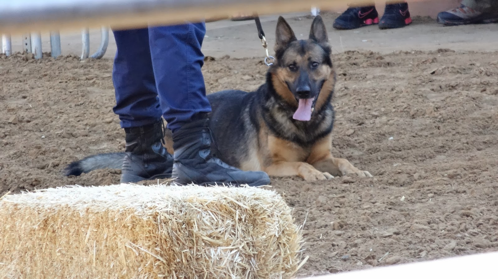 Texas State Dog