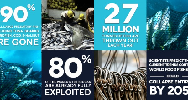 Commercial Overfishing