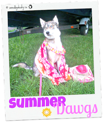 Summer Dawgs - Fun In The Sun