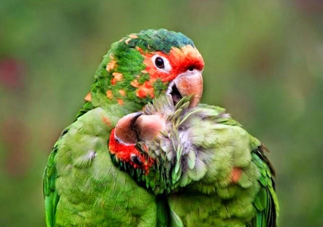 Increíbles fotografías de animales en plena naturaleza.