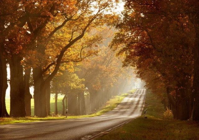 Beautiful RoadsBeautiful Roads Wallpapers In HDForest HDRoads Images Pics Pictures HDAmazing