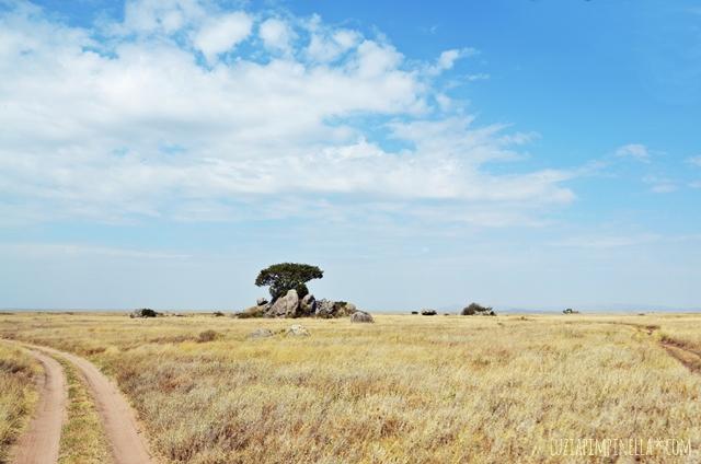 luzia pimpinella | travel tansania | safari in der serengeti - savanne kopjes