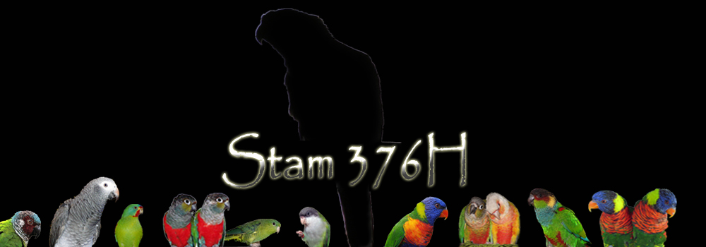 stam 376H