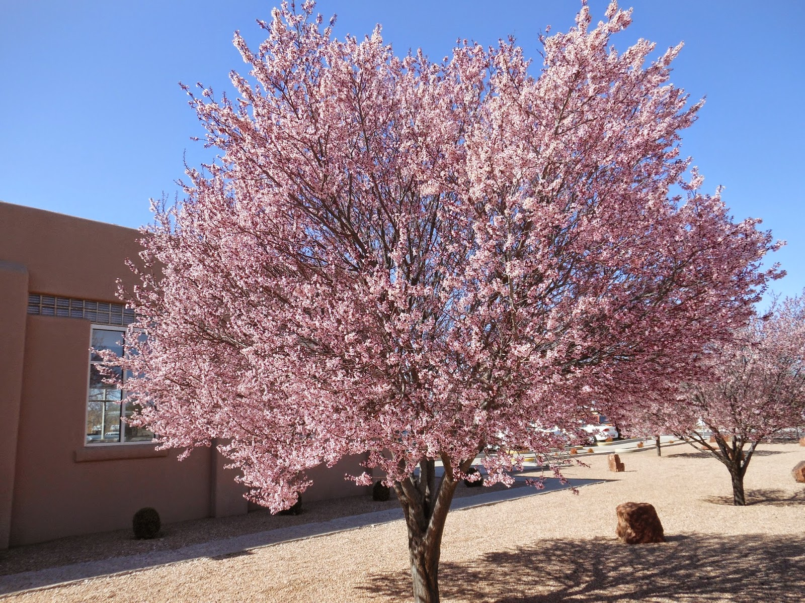 Trees That Please Nursery Mothers Day Gift Ideas Flowering Trees