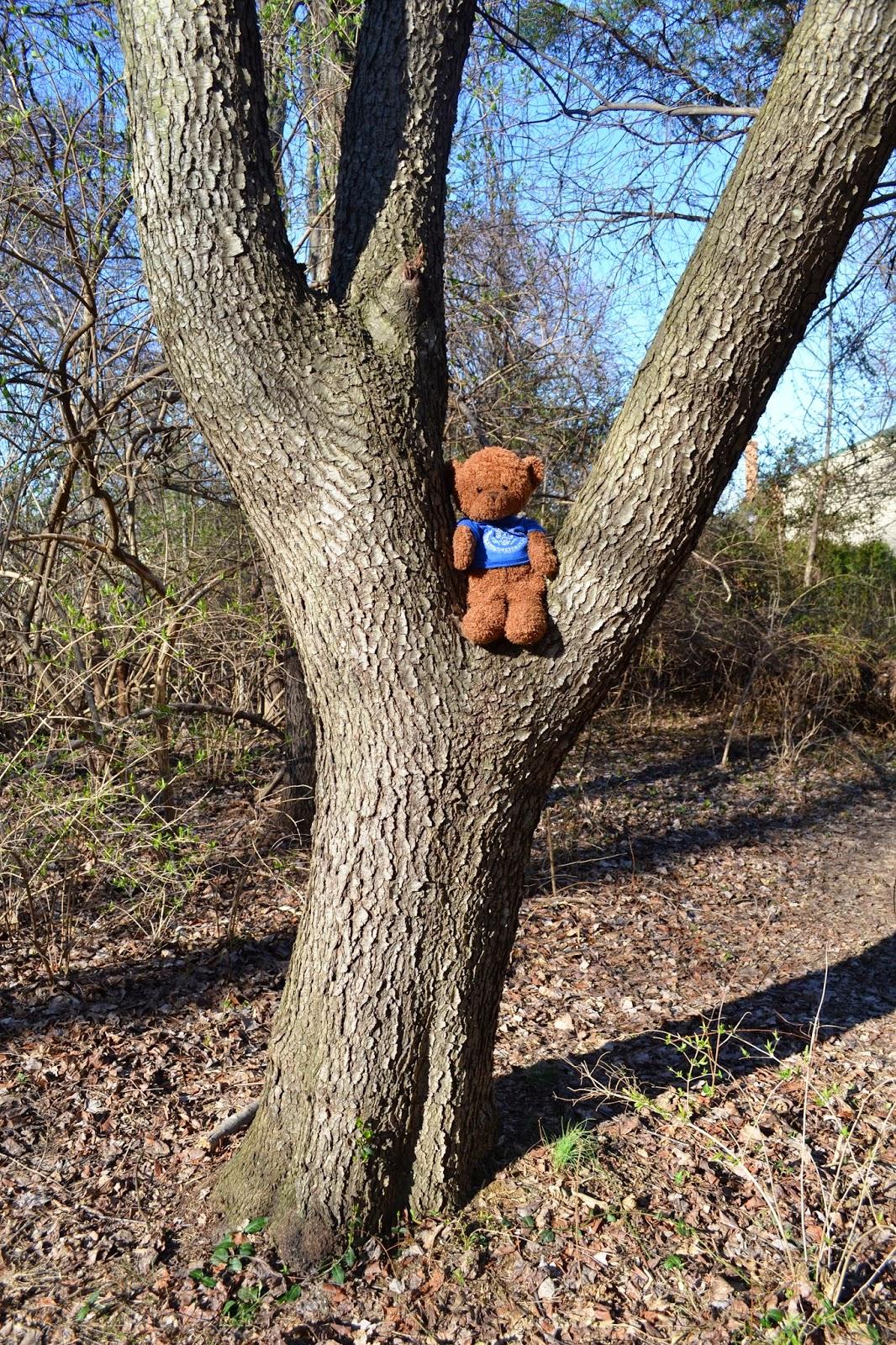 ajdin the bosnian bear walk in the woods