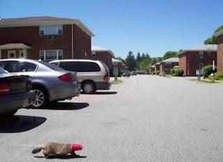 imagem no blog brasil entretenimento cachorro diversão e muito mais