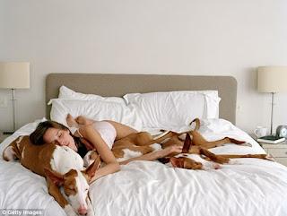 dormir com seu cão