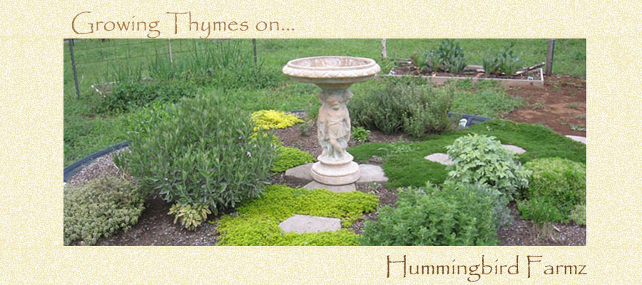 Growing Thymes