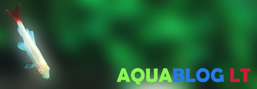AquablogLT