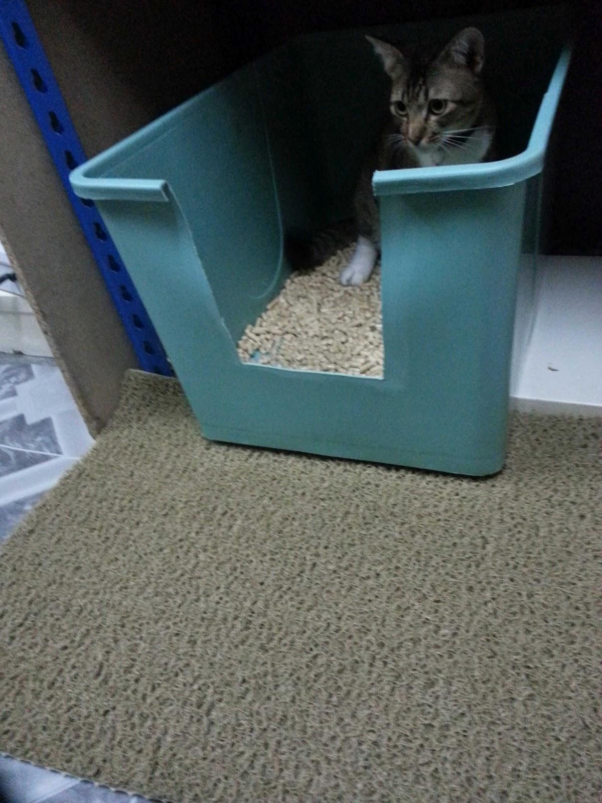 Diy Cat Litter Box My Dearcats Dc