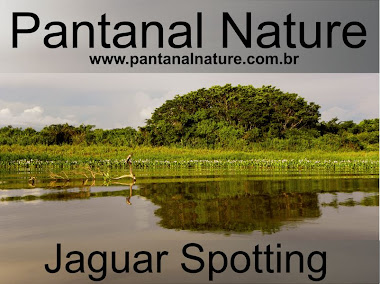 Pantanal Wildlife Safari Tours