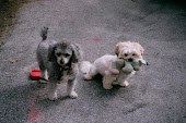 I miei cagnolini