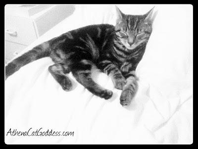 Athena as a kitten