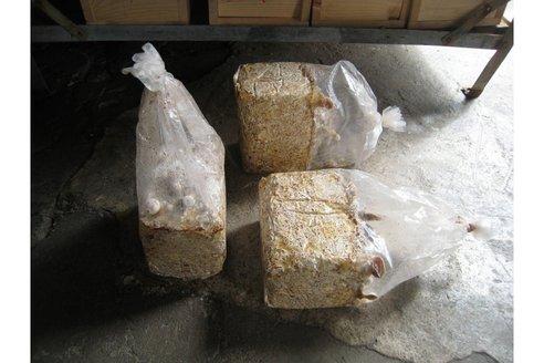 how to grow mycelium bricks