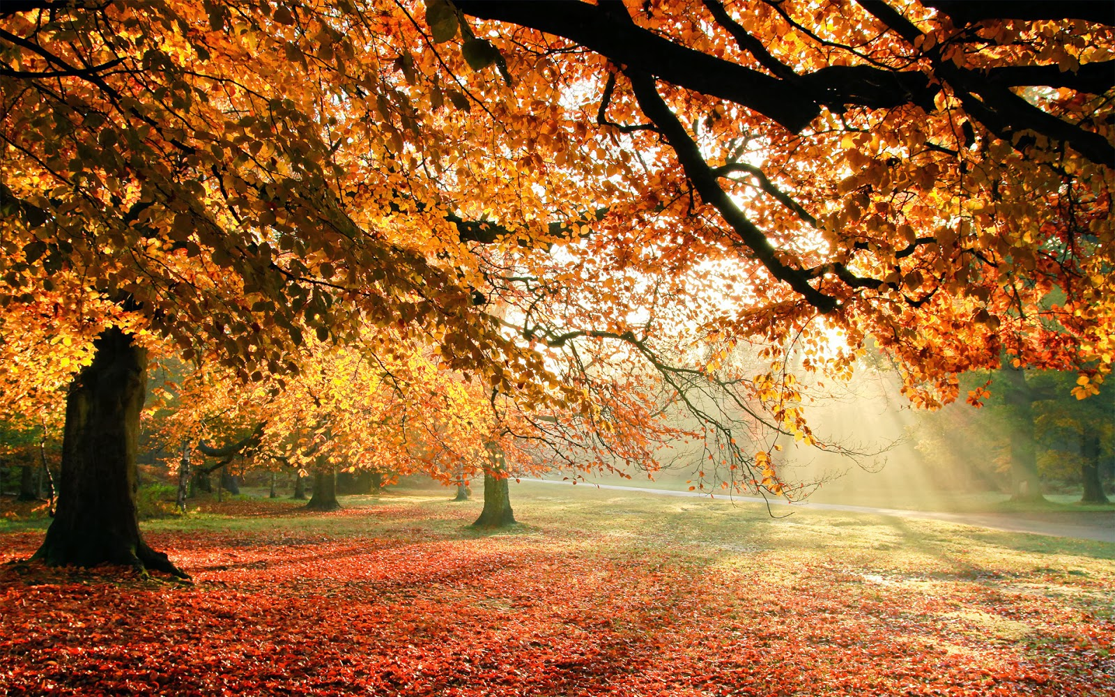 http://funnywallpapers4all.blogspot.com/2014/02/autumn-trees-sun-light-funny-wallpapers.html
