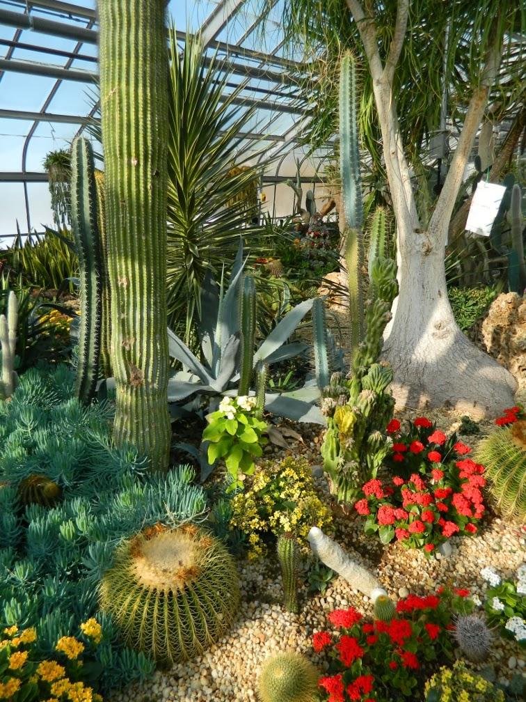 Centennial Park Conservatory Etobicoke desert garden by garden muses-not another Toronto gardening blog