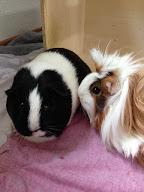 Jinxie & Cookie
