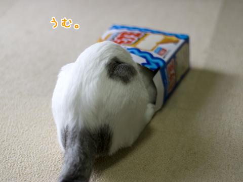 箱に頭を突っ込むのが好きな子猫