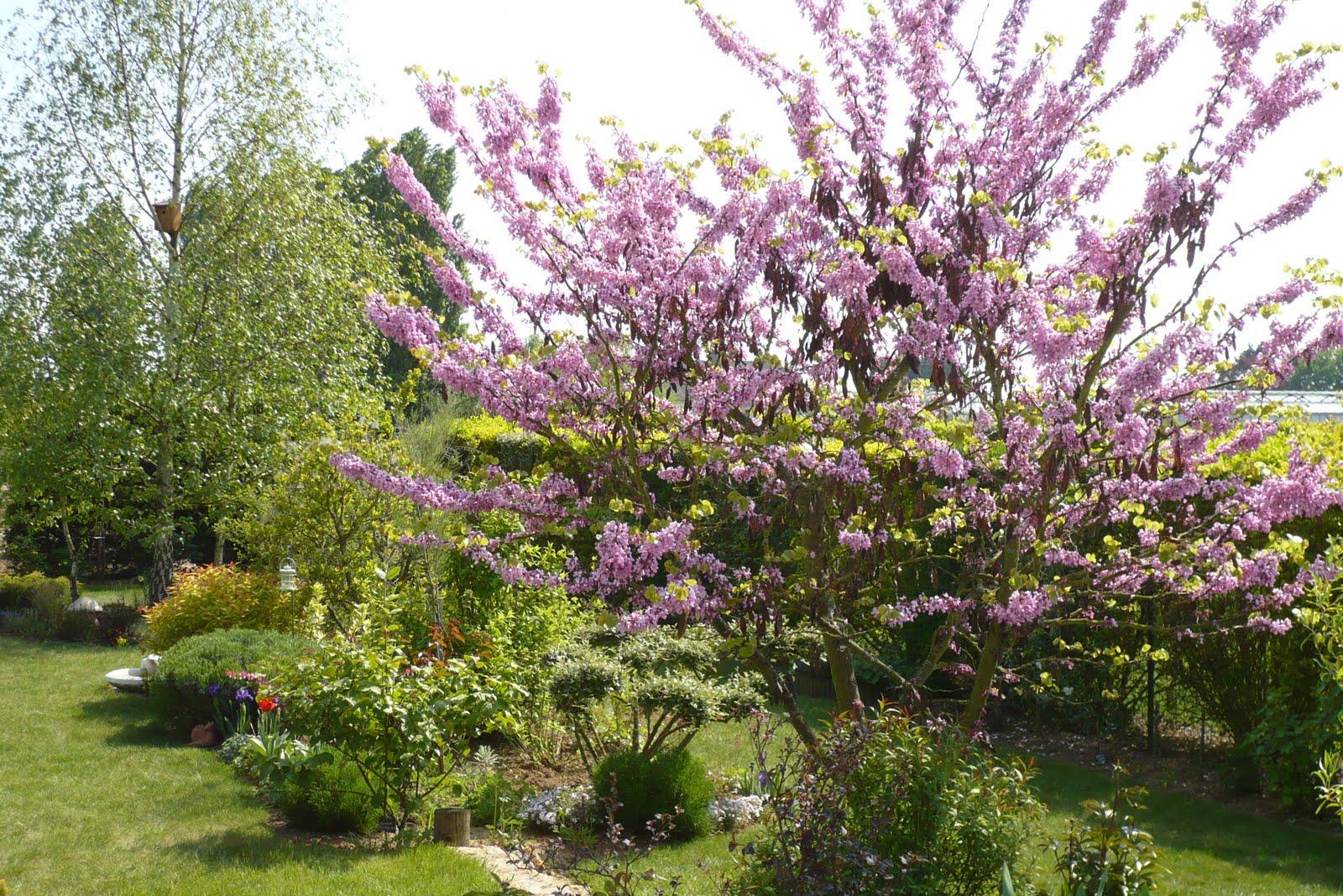 Le jardin de pacalou les douces couleurs du printemps for Les arbres du jardin
