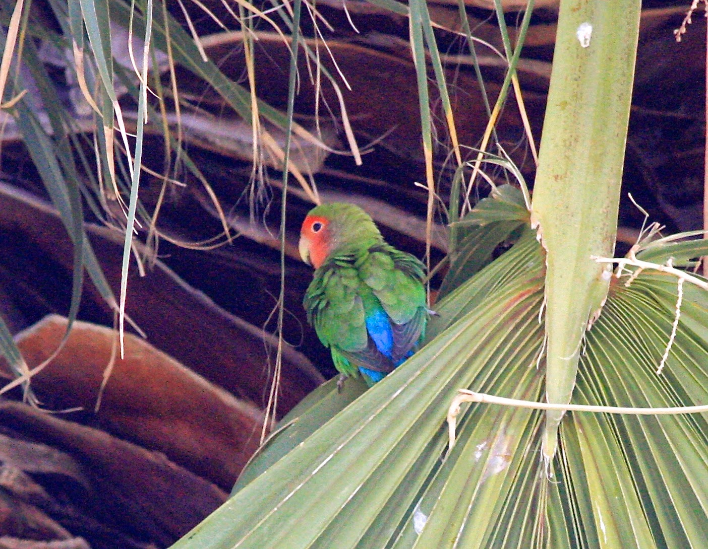 Birding Honduras | Tropical Birding - Beaks and Peaks
