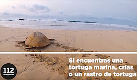 SI VES UNA TORTUGA EN LA PLAYA