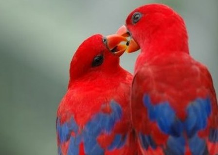 Beautiful love birds images - photo#20