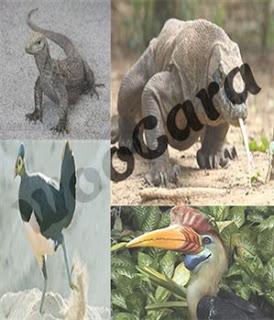Fauna Indonesia Bagian Tengah (Tipe Peralihan)