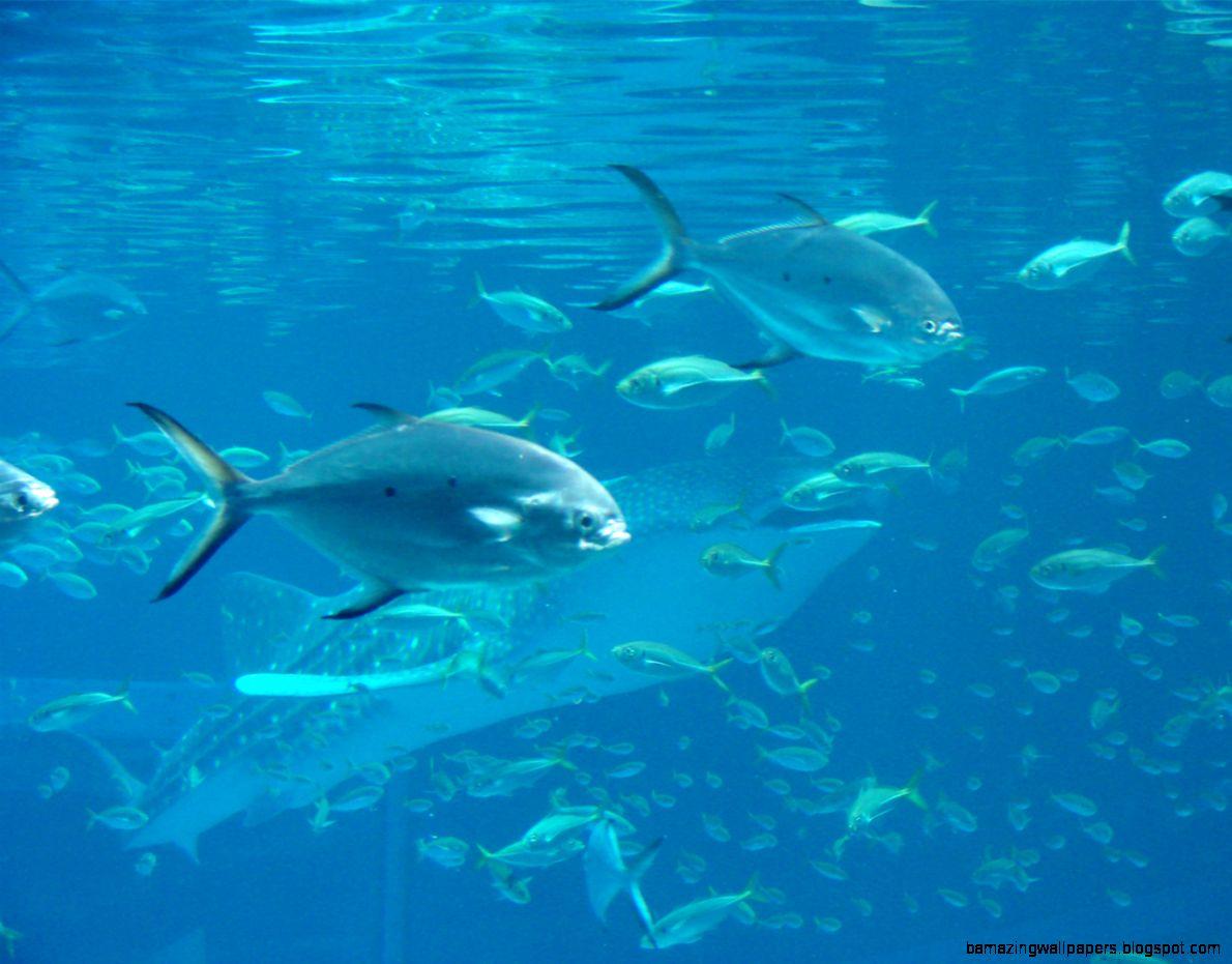 shark aquarium wallpaper wwwimgkidcom the image kid