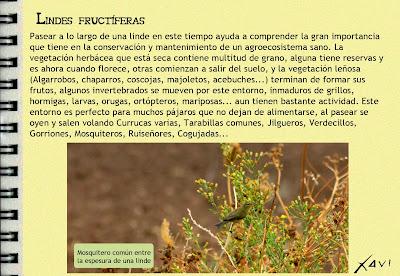 Cuaderno de Campo- Javier Pérez
