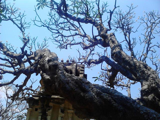 Yoga Narasimha Swamy Temple trees