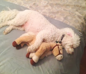 Marley (Now Rocco) sleeps with his paws around toys