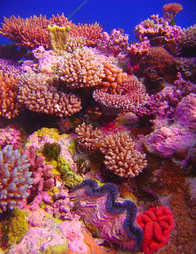 Asombroso Anatomía Arrecife De Coral Friso - Anatomía de Las ...