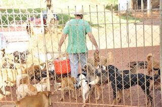 Canil de Iracemápolis: projeto permitirá apadrinhamento de animais - See more at: http://www.gazetainfo.com.br/ns/noticia.php?titulo=Comit-permite-a-iracemapolense-apadrinhar-animais-no-canil-?r=noticias&id=35126#sthash.yugj7cjX.dpuf