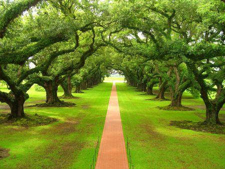 Green Nature Wallpaper Desktop For Natural Backgrounds Leaf Beautiful
