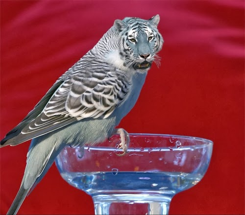 25-Tiger-and-Budgerigar-a-Tigerigar-Graphics-Designer-Digital-Taxidermist-Animangler-www-designstack-co