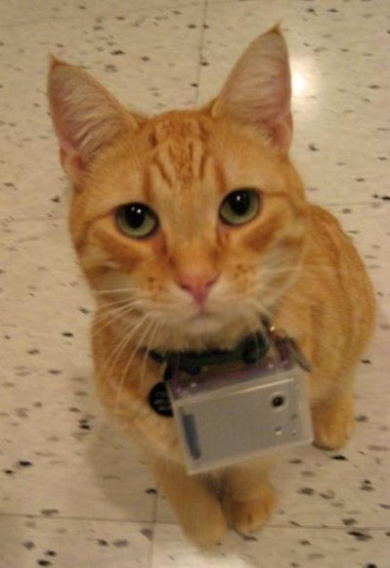 imagens interessante capturadas por uma câmara fotográfica presa a um gato; vendo o mundo com o olhar dos gatos