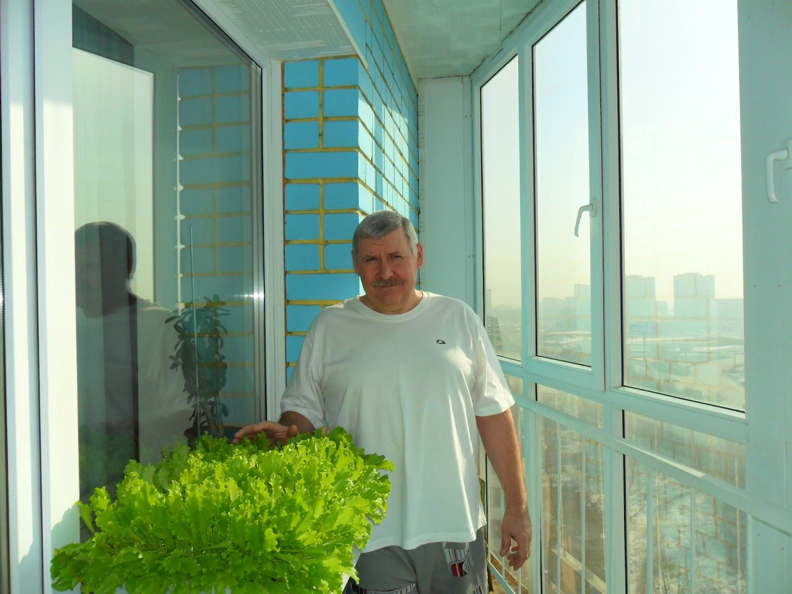 Выращивание зелени летом на балконе 34