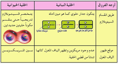 الفرق بين الانقسام المتساوي في  الخلية النباتية والخلية الحيوانية