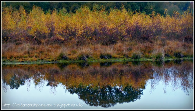 autumn heathland reflections