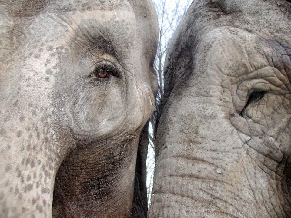 santuario de elefantes
