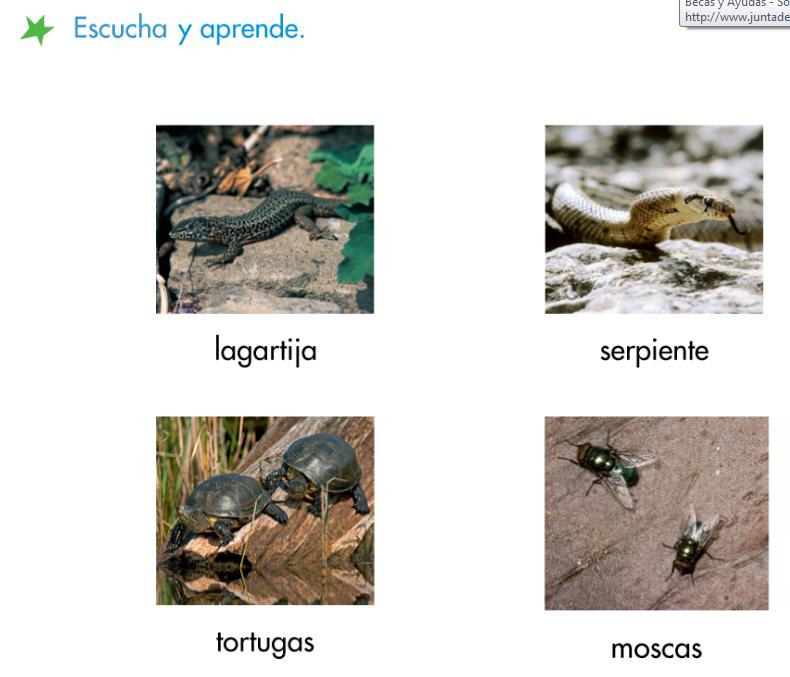 http://www.primerodecarlos.com/SEGUNDO_PRIMARIA/febrero/tema3/actividades/lengua/singular_plural.swf