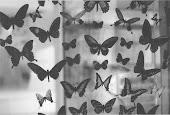 Los animales que mejor definen la transformación