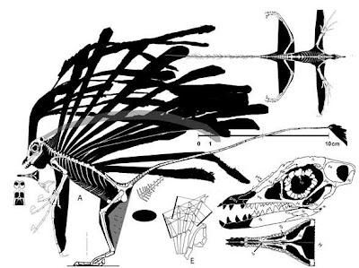 esqueleto de Longisquama