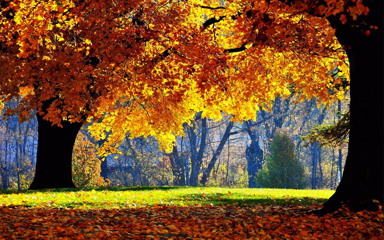 Beautiful Autumn Tree Morning Nature Wallpaper
