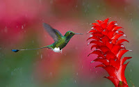 Hummingbird Photo and Picture 23