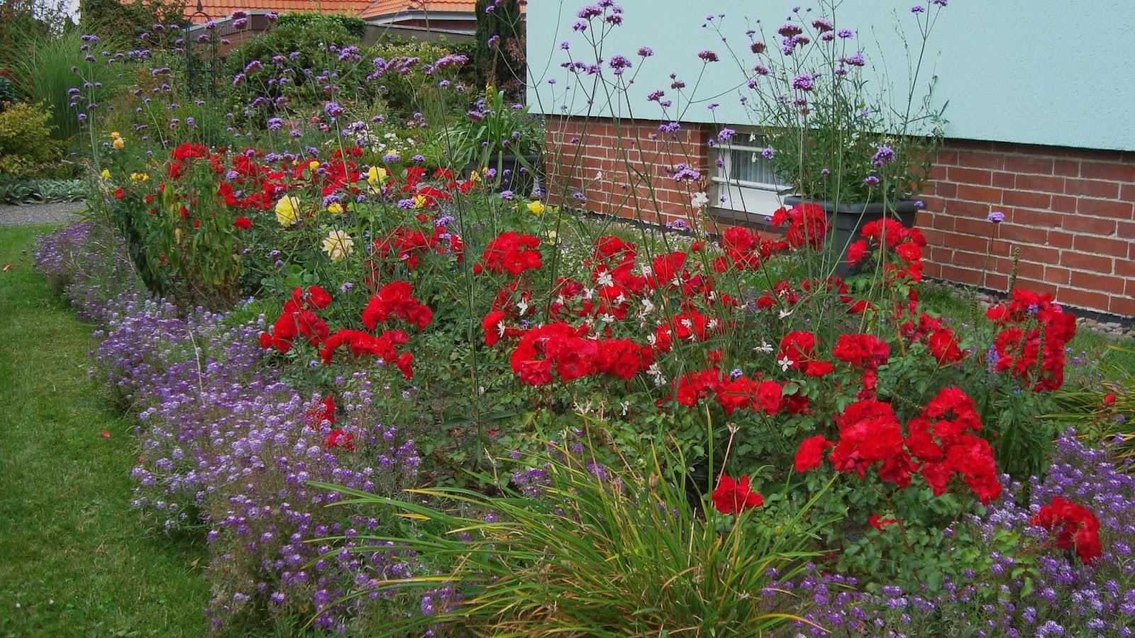 nichtigkeiten aus dem b ger garten rosenbeet im vorgarten. Black Bedroom Furniture Sets. Home Design Ideas