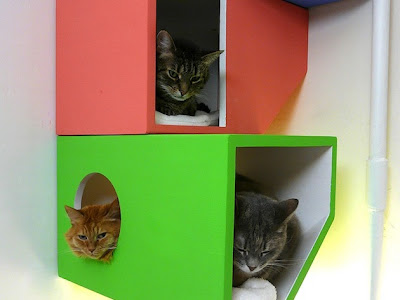 Rumah Kucing 1