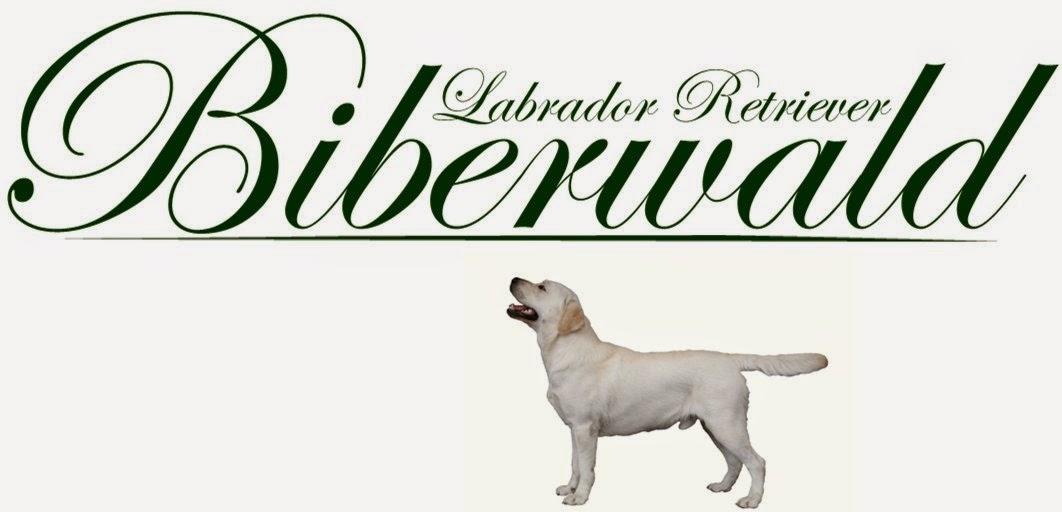 Biberwald